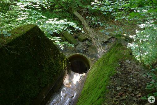 Einleitung Wassergraben Biotop 200 (Dr. H. Zelesny)