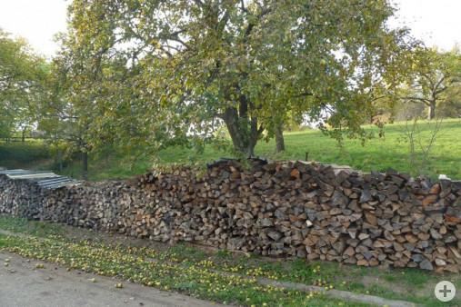 Holzstapel (Dr. H. Zelesny)