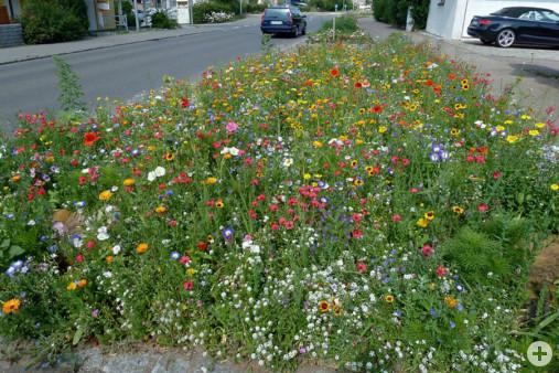 Mössinger Blumenmischung Straße nach Eislingen (Dr. H. Zelesny)