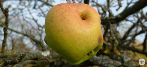 Obst 2 (Dr. H. Zelesny)
