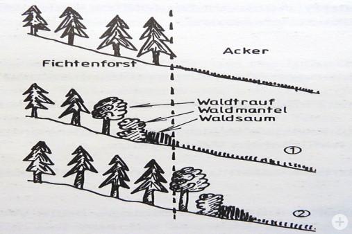 Wald Legende